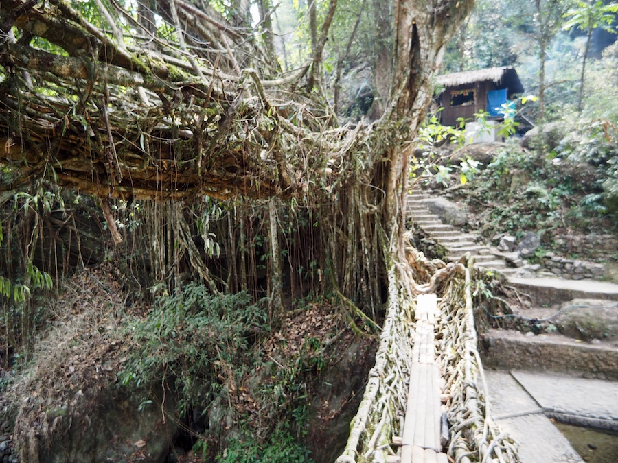 Root bridges